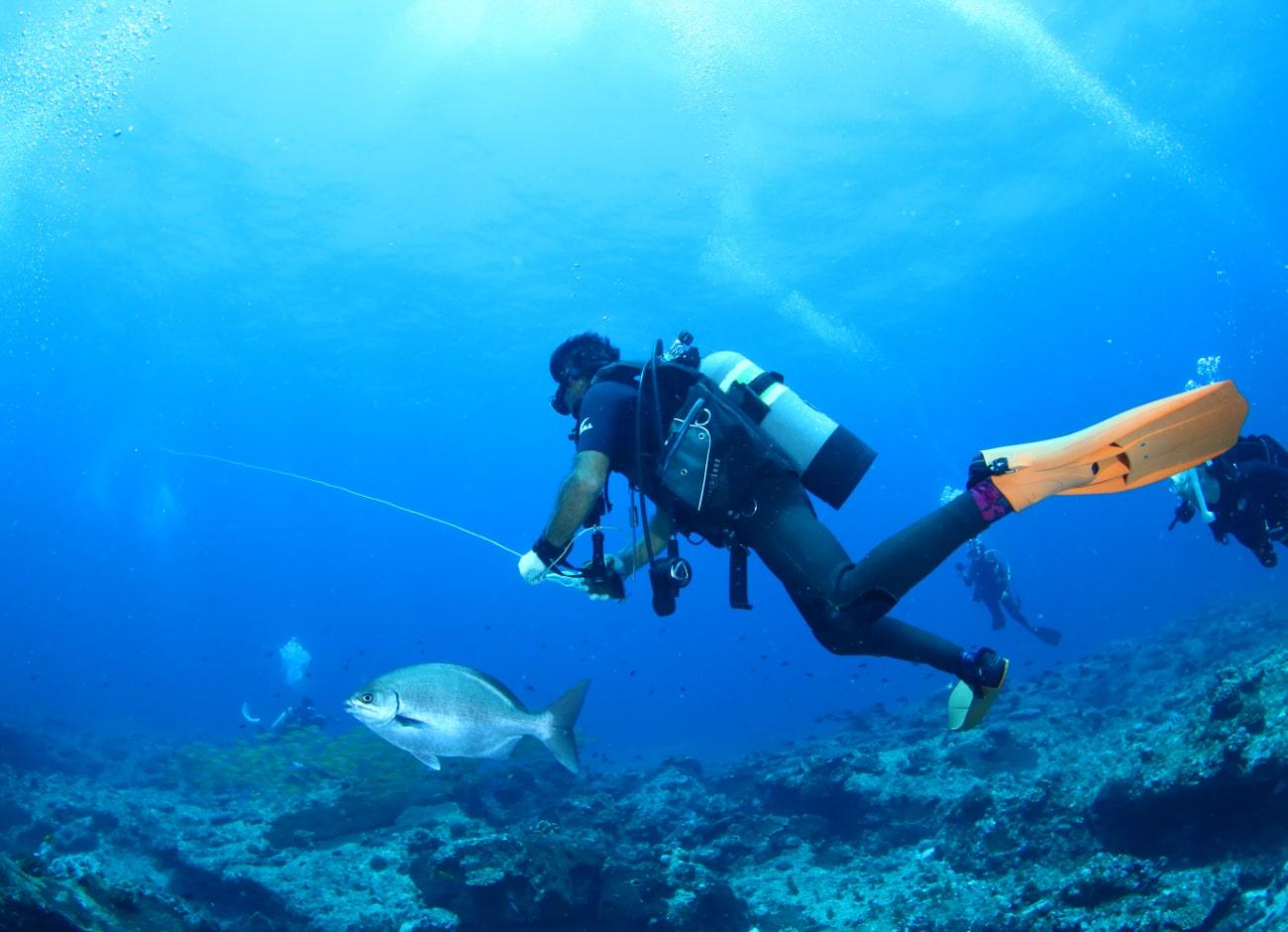 サウスのダイビングポイントはダイバーのいない100%自然の海。