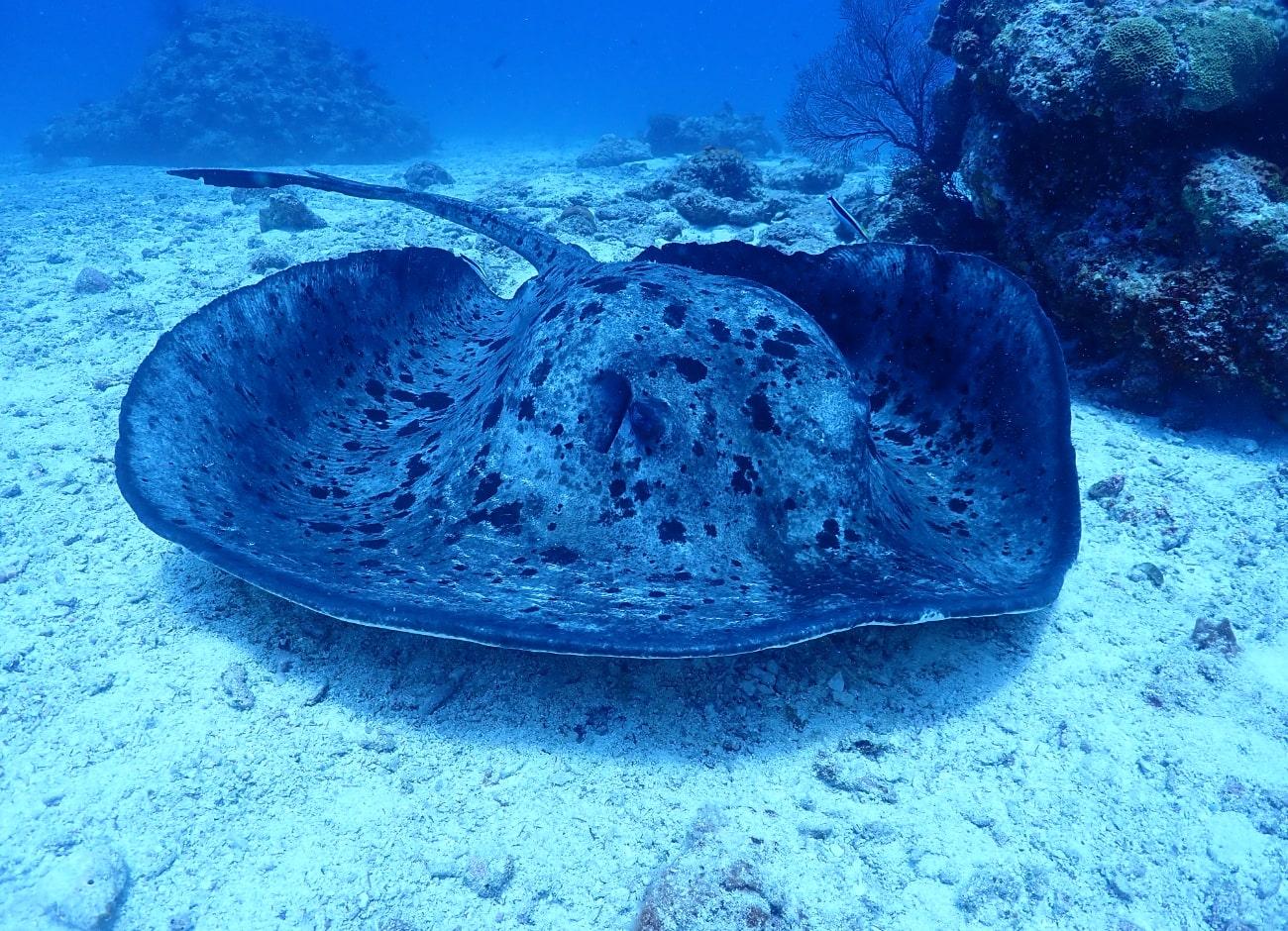40年潜り続けた海人が選んだ「チービシ」とは